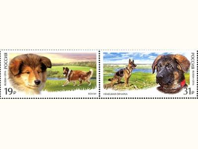 Всемирная выставка собак