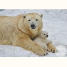 Новосибирский зоопарк. Герда и Шилка